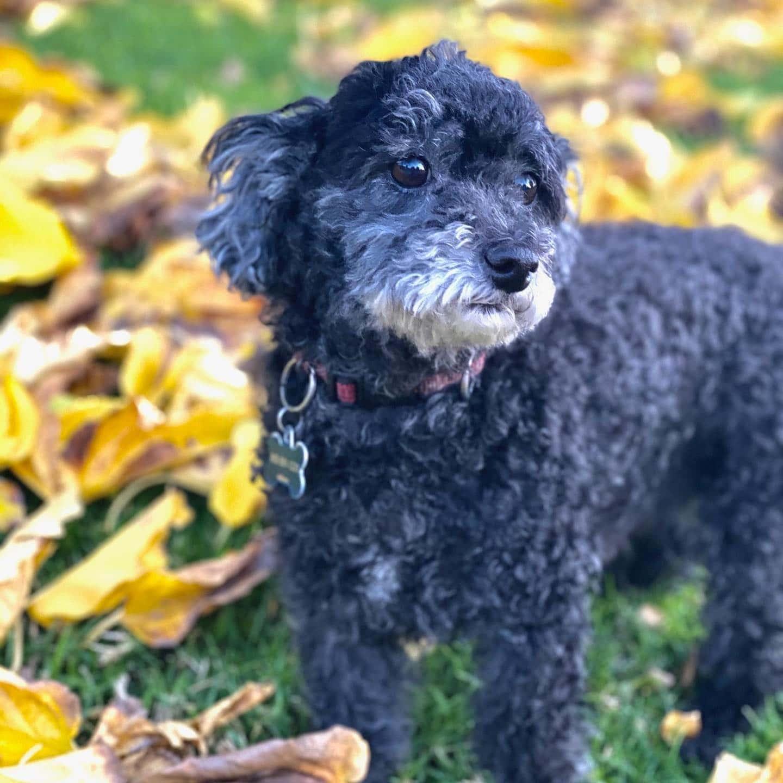 DeniseMosaics-Pet Portraits Dog Display Gallery 8x8 2b